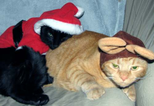Christmas Rimmon and Zak
