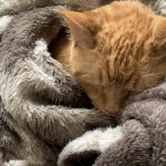Lord Lardbottom in a Cuddle Pile